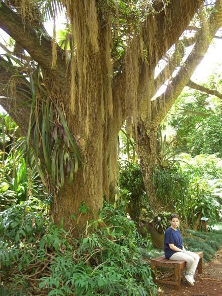 USA/Kauai/Tropical Botanical Gardens/CIMG7375